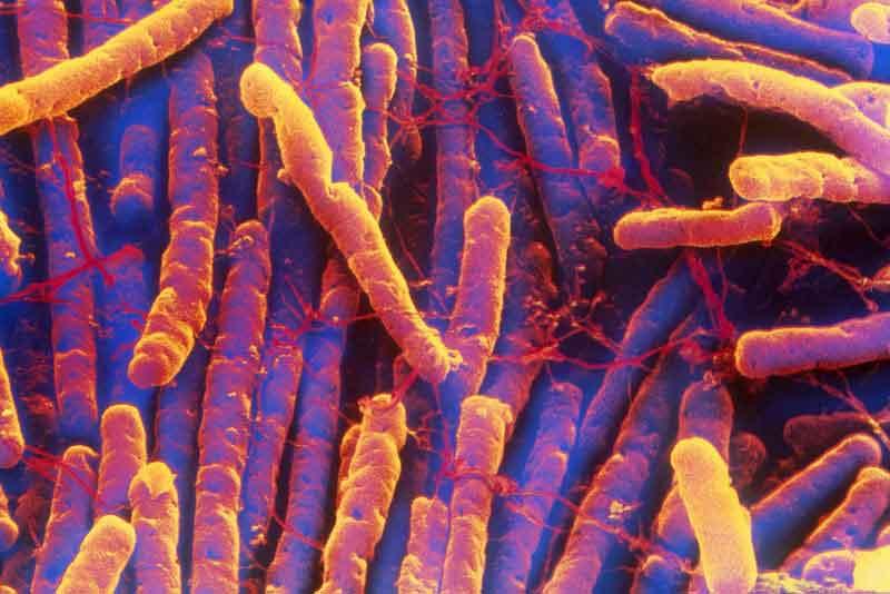 C-diff Clostridium difficile Disinfection