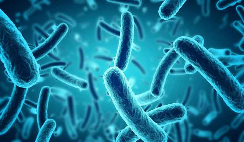Bacteria Disinfection Specialists